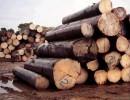 俄罗斯马达加斯加铁木豆高栏港木材进口报关