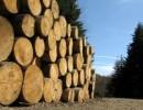 木材进口报关手续|流程|费用|蛇口进口清关