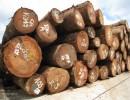 ★木材进口报关手续