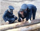 ◆俄罗斯水曲柳进口报关◆优势木材清关推荐