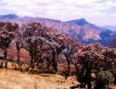 格萨拉生态旅游区