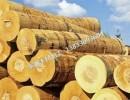 木材加工,木材批发