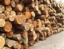 东南亚木材进口报关代理|木材进口报关公司