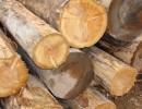 四川成都低价供应加拿大铁杉原木