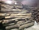 杭州 小叶紫檀卖多少 小叶紫檀的批发价是多少 原木材
