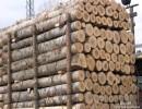 东南亚木材进口报关报检代理公司