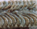 如何从日本进口冷冻海鲜|杭州冷冻食品进口清关流程