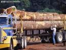 广州进出口公司代理木材进口报关服务
