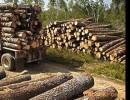 大红酸枝原木进口清关庄家|木材进口清关门到门物流服务