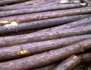供应国内杉木原木