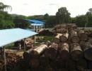 供应缅甸红酸枝原木