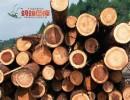 上海进口木材报关,代理木材进口报关公司