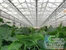 花卉温室大棚,花卉养殖大棚,花卉种植大棚