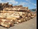 美国木材进口报关 上海代理商检查验