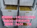 苏州豆芽机多少钱 无公害豆芽设备 联浩直销豆芽机械