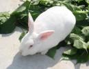 南昌市养殖大种兔苗挣钱吗兔苗多少钱一只利润有多少