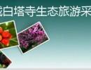 邹城白塔寺生态旅游采摘园