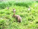 供应长毛兔长毛兔价格长毛兔苗