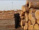 俄罗斯、欧洲、南美、非洲等国家和地区的大型木材进口清关
