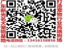 广州黑背犬多少钱一只 广州到哪能买到纯种黑背犬