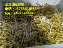 豆芽生产线_科发豆制品设备_菜篮子豆芽生产线