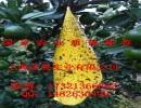 彦晨牌双面进口胶粘虫黄板/PVC塑料粘虫板/杀虫板/诱虫板