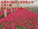 花卉温室大棚邢台优质薄膜温室建设费用
