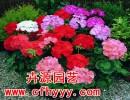 花卉种子怎么种植,采购价格【卉源园艺】
