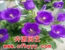 花卉种子图片,哪里有卖【卉源园艺】