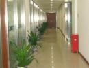 办公室盆景、花卉租摆盆景、植物租摆盆景