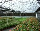 花卉温室建设报价,潍坊提供可信