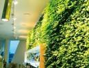 广东垂直绿化墙环保花卉植物2015市场价格