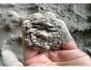 海螺牌硅酸盐水泥PⅡ52.5R 通用建材水泥批发 海螺水泥