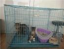盐池宠物医院电话 盐池宠物医院地址 银川望康宠物医院供