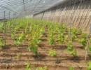 供应吉林省白城市滴灌管材批发厂家直销大棚蔬菜滴灌管批发