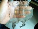 伟华蟾业蟾蜍种类(图)|蟾蜍养殖技术|全南县蟾蜍
