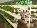 广州花卉无土栽培立体种植槽批发