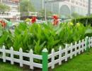 滨源厂家 生产制作PVC园林草坪护栏 庭院pvc护栏