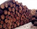 泰国原木进口报关清关公司