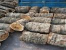 枣木-枣木原木、常年大量供应枣木、雕刻枣木、工艺品枣木